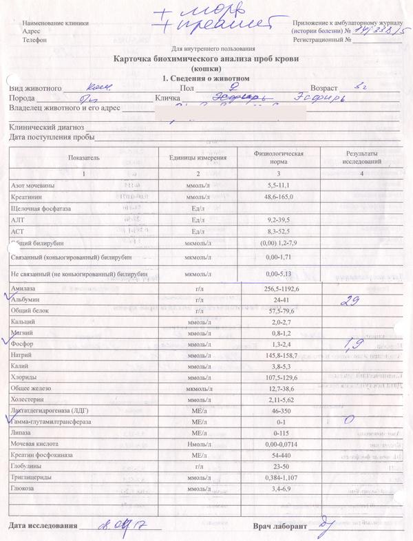 Биохимического крови бланк поликлиниках анализа лечение пиелонефрит цистит признаки